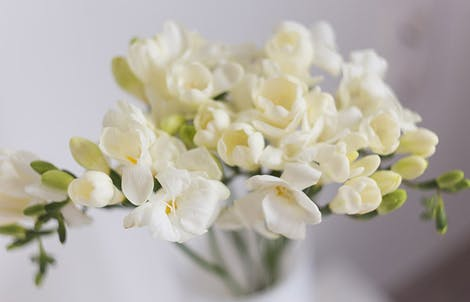 Photograph of freesias