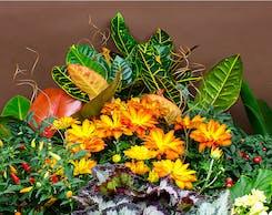 Seasonal Outdoor Autumn Plants