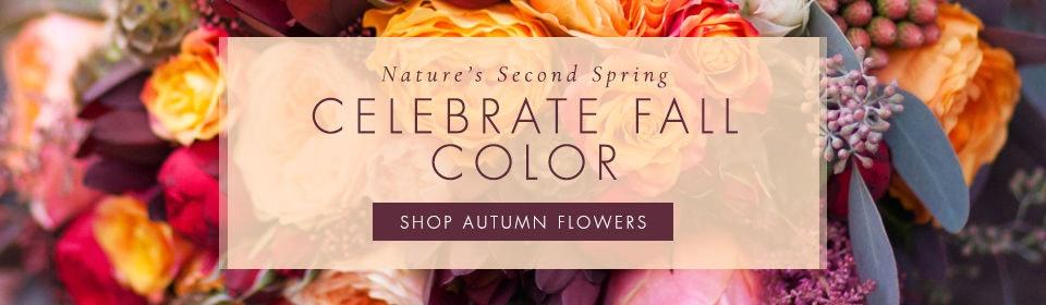 Fall Flowers Danvers, North Shore, Massachusetts