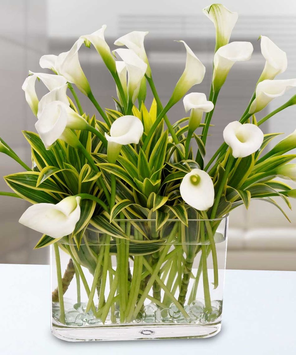 Calla Lily Beauty
