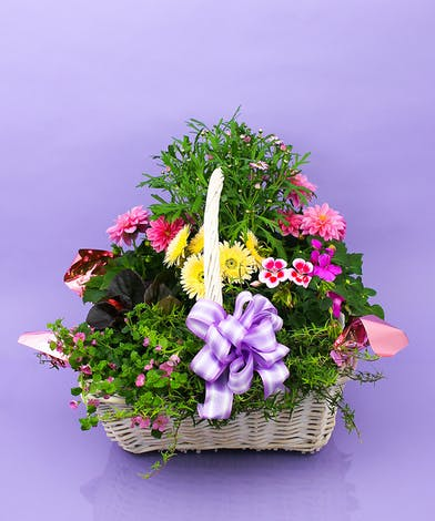 Plant colors and varieties vary based on availability.  Approximate sizes:  Regular 14x14H  Deluxe 18Wx18H