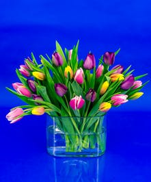 Our Dutch tulip vase is a collection of imported tulips in a simple glass