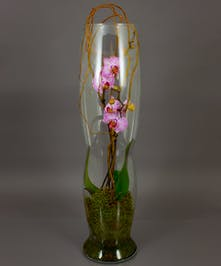 We've potted a phalaenopsis orchid plant in our imported Dutch Elegance vase for a European inspired design. Phalaenopsis orchids can bloom for months with minimal care.