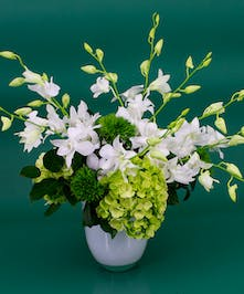 St. Patrick's Day Orchids  - Same Day Delivery Danvers, MA