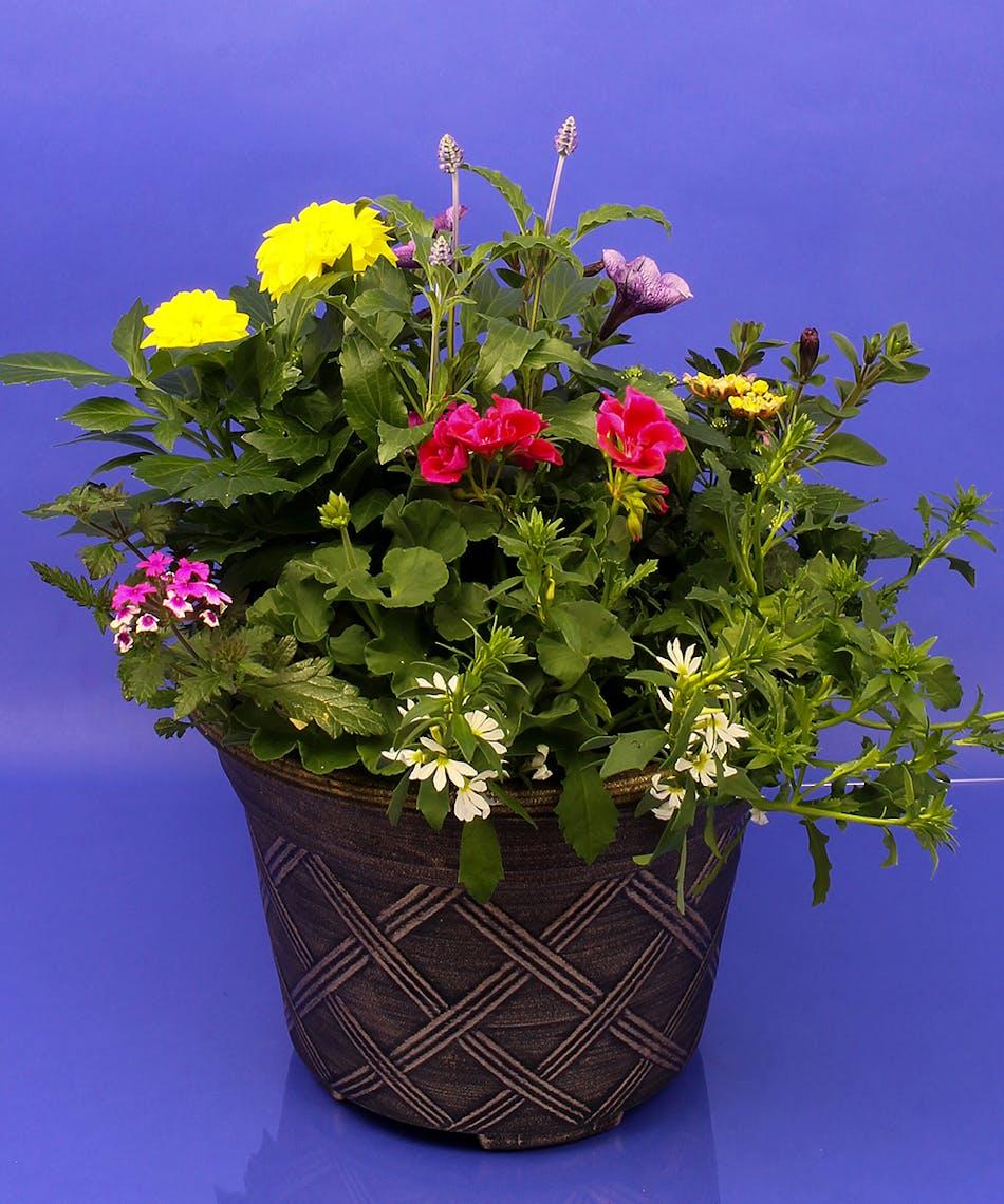 Annual planter same day delivery danvers ma currans flowers annual planter same day delivery danvers ma izmirmasajfo