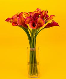 Mango calla lilies make a fiery display of seasonal beauty, seated in a clear glass vase, to create a stunning, sophisticated bouquet.