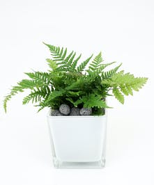Autumn Fern - Same Day Delivery, Danvers MA