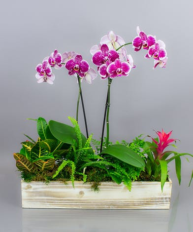 Send our Beloha Garden, an impressive collection of orchids and tropical foliage plants.