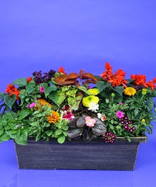 Our Bright Annuals Window Box Planter is a beautiful collection of healthy annuals grown in our own Danvers greenhouses. Window Box Size: 24