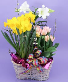 Easter Bulb Basket - Same Day Delivery, Danvers MA
