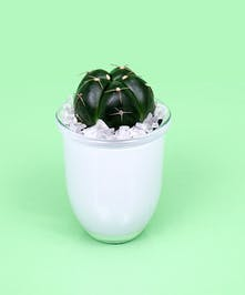 Chin Cactus Plant - Same Day Delivery, Danvers MA
