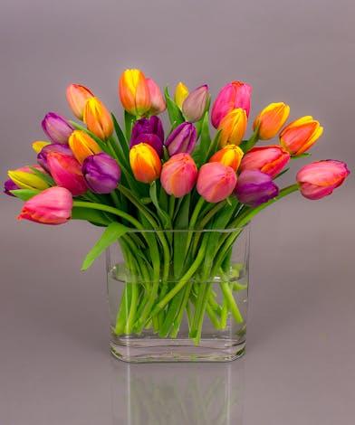 Currans Grown Tulip Vase - Easter / Spring Flowers