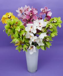 Lush Cymbidium Vase - Same Day Delivery, Danvers MA