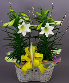 Easter Lily Basket - Same Day Delivery, Danvers MA