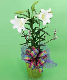 Currans Easter Lily - Same Day Delivery, Danvers MA