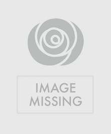 Spring Plant Basket - Same Day Delivery, Danvers MA