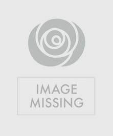 Easter Plant Basket - Same Day Delivery, Danvers MA