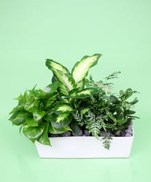 Contemporary Green Plant Planter - Same Day Delivery, Danvers MA