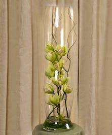 Green Cymbidium Elegance Vase