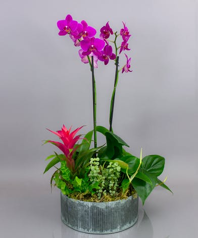 Our Luzon garden is a chic combination of elegant orchids and lush tropical foliage.