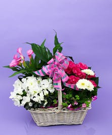 Mother's Day Indoor Plant Basket - Same Day Delivery, Danvers, MA