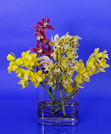 Miniature Cymbidium Orchid Vase - Same Day Delivery Danvers, MA