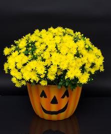 Mumkin - Currans Flowers