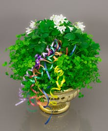 A lush collection of shamrocks including clover and Oxalis planted in our brilliant gold compote and accented with a rainbow burst of ribbon.