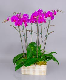 ur Prague Orchid Garden offers a bounty of beautiful blooms. Perfect for the home or office and for any occasion.