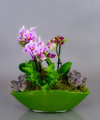 We have artfully designed orchids, succulents, and ferns in a unique container to create this design.