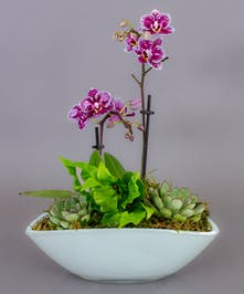 Our Yuma Garden features succulents and orchids in a contemporary white container.