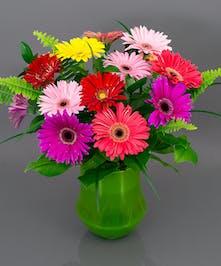 Gerbera Arrangement - Currans Flowers