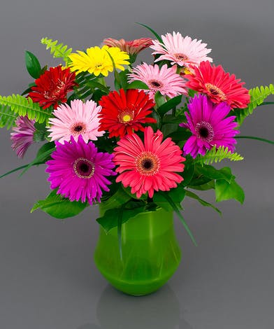 Gerbera Arrangement - Currans Flowers
