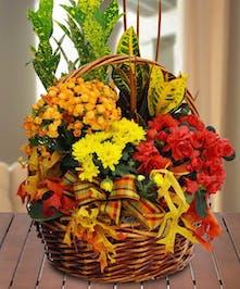 Fall Blooming Garden Basket - Danvers, MA