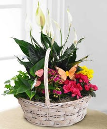 Currans Flowers:  Butterfly Garden Basket - Delivery to Danvers, Peabody, MA