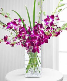 Orchid Delight - Same-day Delivery Danvers, MA - Currans Flowers