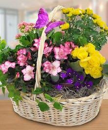 Garden Basket - Danvers, MA