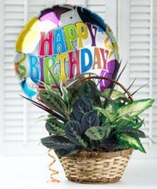 Birthday Balloon Garden Beverly, Massachusetts - Currans Flowers