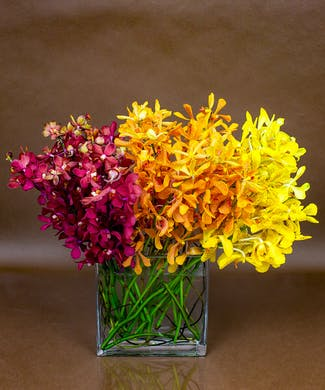 Autumn Orchid Collection
