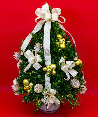 Large Boxwood Tree with White Scroll Ribbon