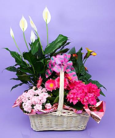 Mother S Day Indoor Plant Basket Same