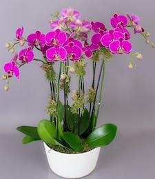 Prague Orchid Garden