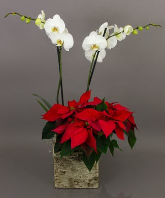 Rustic Winter Orchid Planter