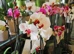 A wide range of orchids on display