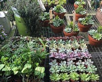 A nice selection of potted plants, herbs and flowers on display